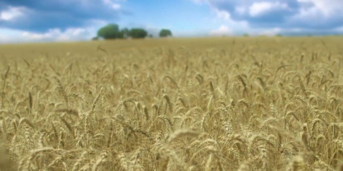 Nano-cluster: Landbouw